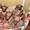 Щенки левретки - 3 мальчика изабеллового окраса #721120