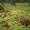 Сдаю частный дом в турбазе Чайка-Селигер, в сосновом бору, у озера!   - Изображение #10, Объявление #1228585